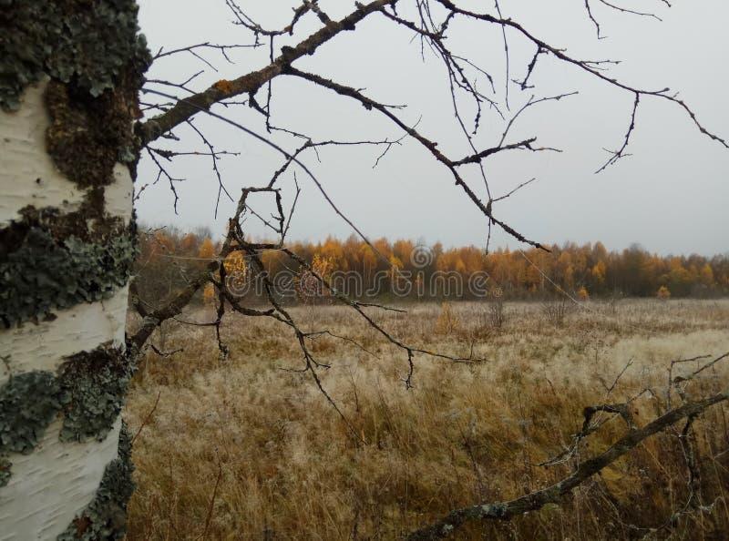 H?st solig dagskogliggande gråa himmel och träd med gula sidor och inga sidor horisont naturlig bakgrund av Ryssland royaltyfria foton