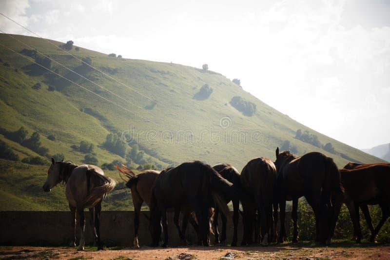 H?star i bergen caucasus royaltyfri foto