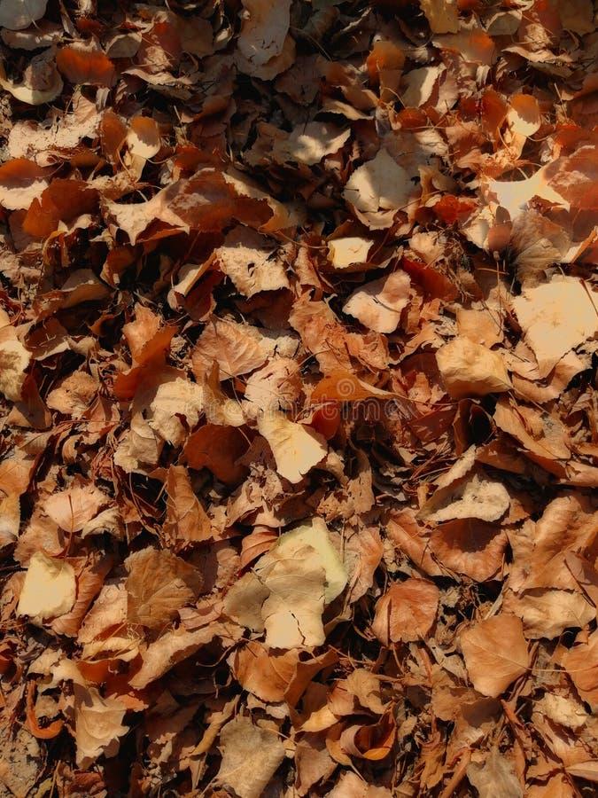 H?sten l?mnar p? det slipat Stapel av leaves ljus orange H?st V?rme v?der royaltyfri foto