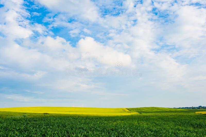 H?sten l?ter vara kanten med olika gr?nsaker p? vit bakgrund Fält för grön havre under blå himmel, härligt landskap royaltyfri foto