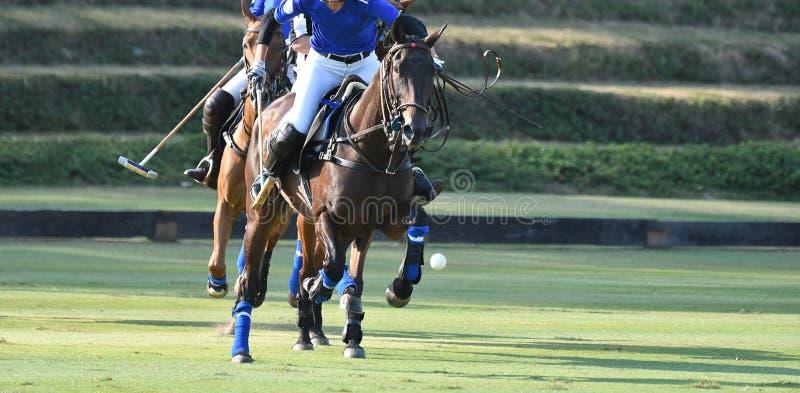 H?sthastighet i Polo Match royaltyfri foto