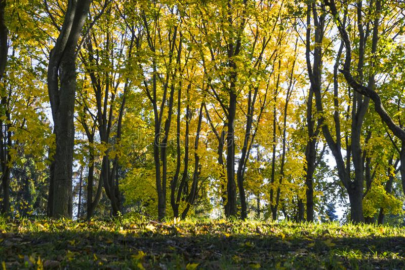 h?stlig skog royaltyfri foto