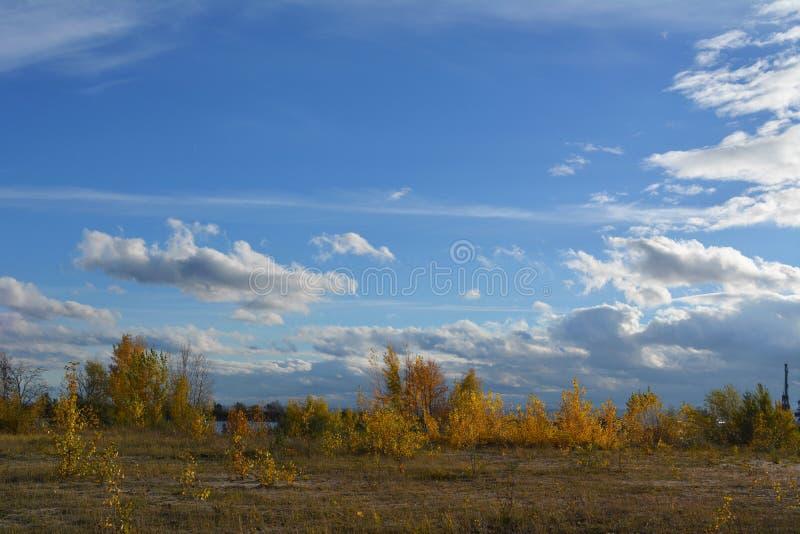 H?stliggande med guld- trees Panoramautsikt med härlig himmel fotografering för bildbyråer