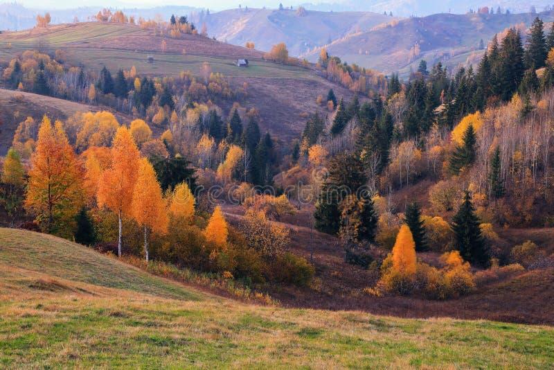 H?stplats i den soliga dagen I den härliga skogen av träden med apelsinen är gula färgade sidor där ett gammalt hus arkivbild