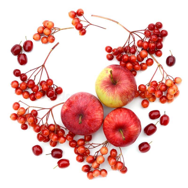 H?stplockning Sammansättning av frukter, bär på en vit bakgrund Äpplen viburnum, skogskornell royaltyfri foto