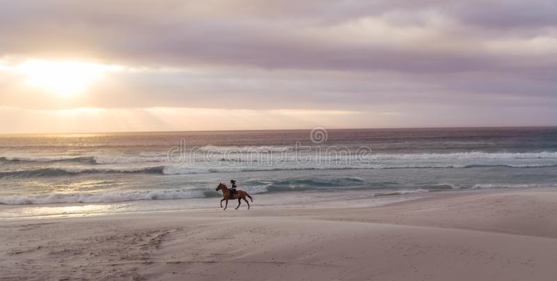 H?stridning p? stranden p? solnedg?ngen arkivbilder