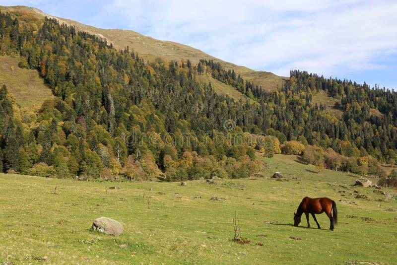 H?stskrubbs?r i de Kaukasus bergen arkivfoton