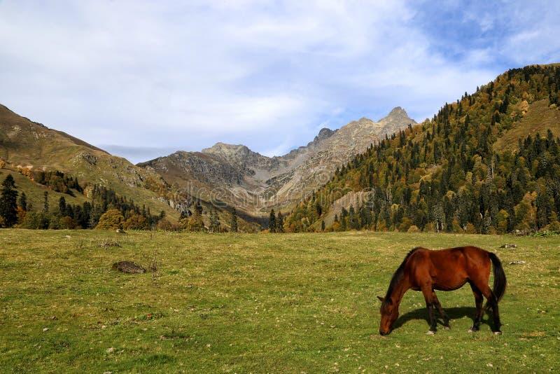 H?stskrubbs?r i de Kaukasus bergen arkivbilder