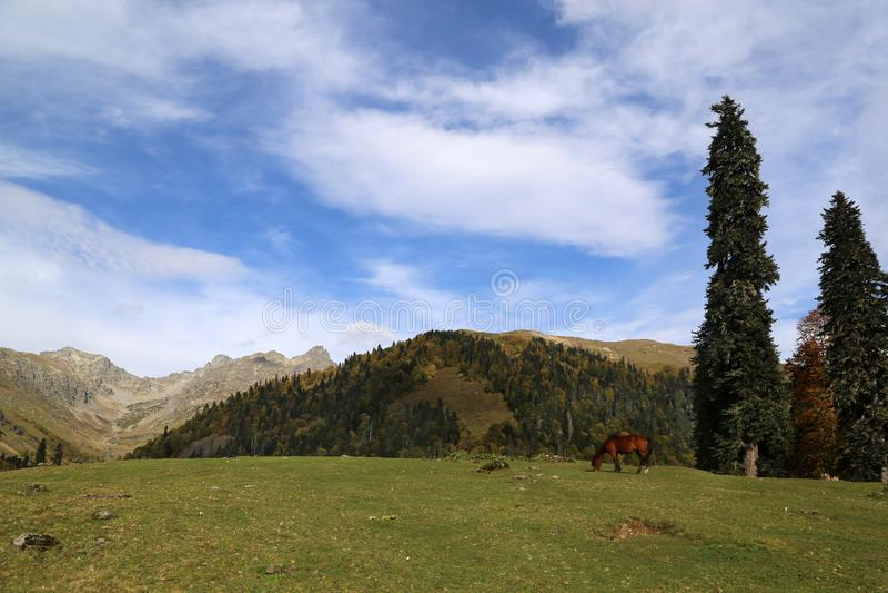 H?stskrubbs?r i de Kaukasus bergen royaltyfri fotografi