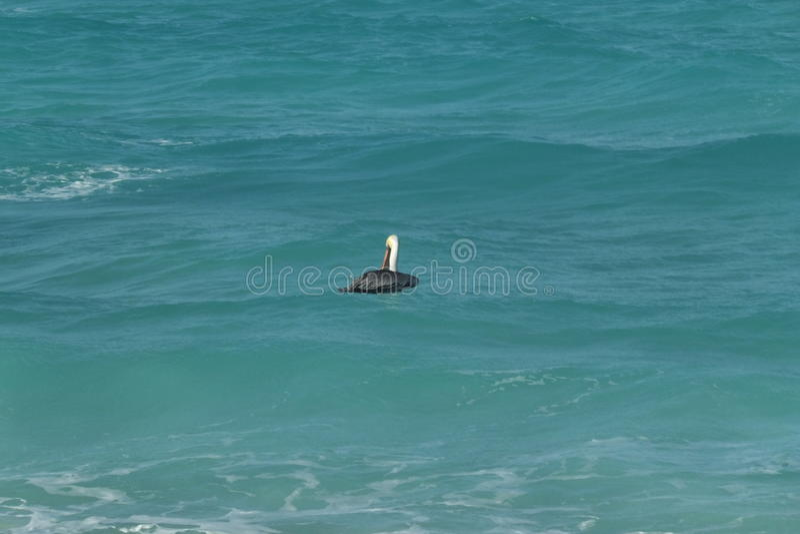 Download Hôtel Melia Cayo Santa Maria - Cuba Image stock - Image du cuba, plage: 87708331