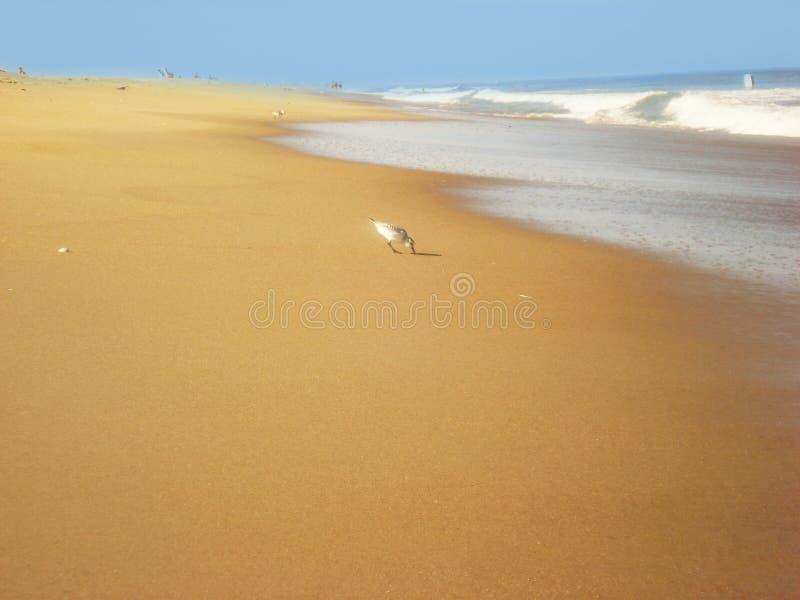 H?user vor der K?ste des Atlantiks, Strand lizenzfreie stockfotos