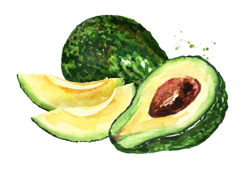 Ha affettato l'avocado fresco maturo Illustrazione disegnata a mano dell'acquerello, isolata su fondo bianco illustrazione vettoriale
