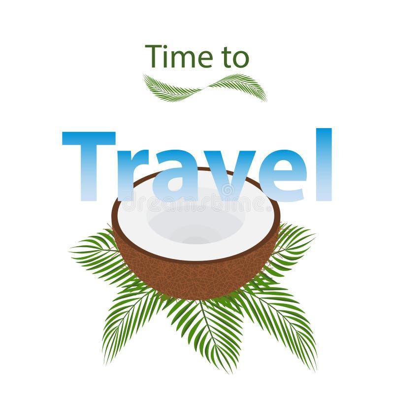 Ha aperto una noce di cocco si trova sui rami della palma, foglie verdi tropicali fotografia stock