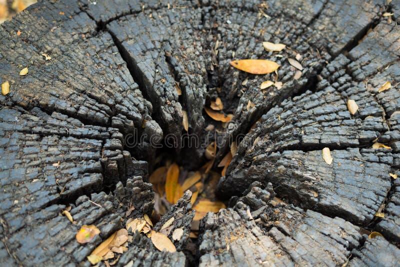 Ha en hjärtainsida av trät arkivfoton