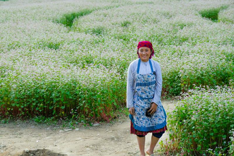Ha Giang / Vietnam - 31/10/2017: Local Vietnamese woman in traditional clothes standing in a field of white flowers in the North royalty free stock image