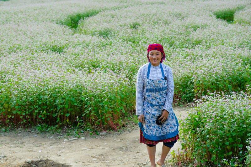 Ha Giang/Vietnam - 31/10/2017: Lokale Vietnamese vrouw in traditionele kleren die zich op een gebied van witte bloemen in het Noo royalty-vrije stock afbeelding
