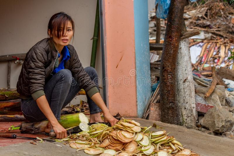 Woman cutting a plant Vietnam. Ha Giang, Vietnam - March 17, 2018: Woman from the Hmong ethnic minority cutting a plant in front of her house in the Yen Minh stock image