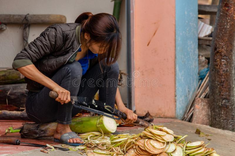 Woman cutting a plant Vietnam. Ha Giang, Vietnam - March 17, 2018: Woman from the Hmong ethnic minority cutting a plant in front of her house in the Yen Minh royalty free stock photos