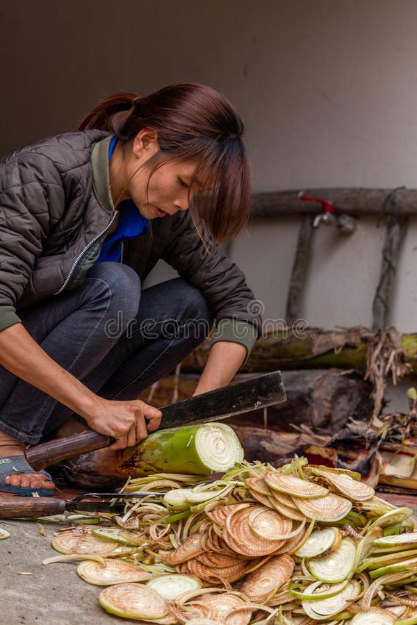 Woman cutting a plant Vietnam. Ha Giang, Vietnam - March 17, 2018: Woman from the Hmong ethnic minority cutting a plant in front of her house in the Yen Minh stock photo