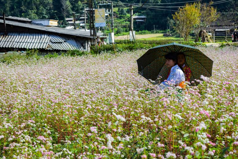 Ha Giang, Vietnam - November 08, 2015: Vietnamese Hmong-minderheidsfamilie die een rust op purpere bloem van aanwinstengebied nem royalty-vrije stock foto's