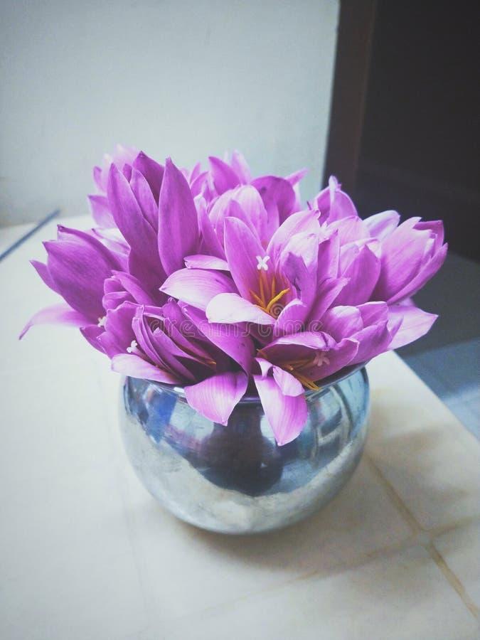 Ha selezionato di recente i fiori dal giardino tenuto dentro la brocca a casa immagini stock