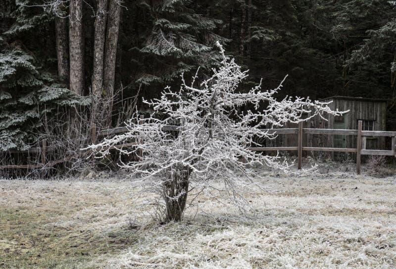 Haagdoornboom in de winter stock foto
