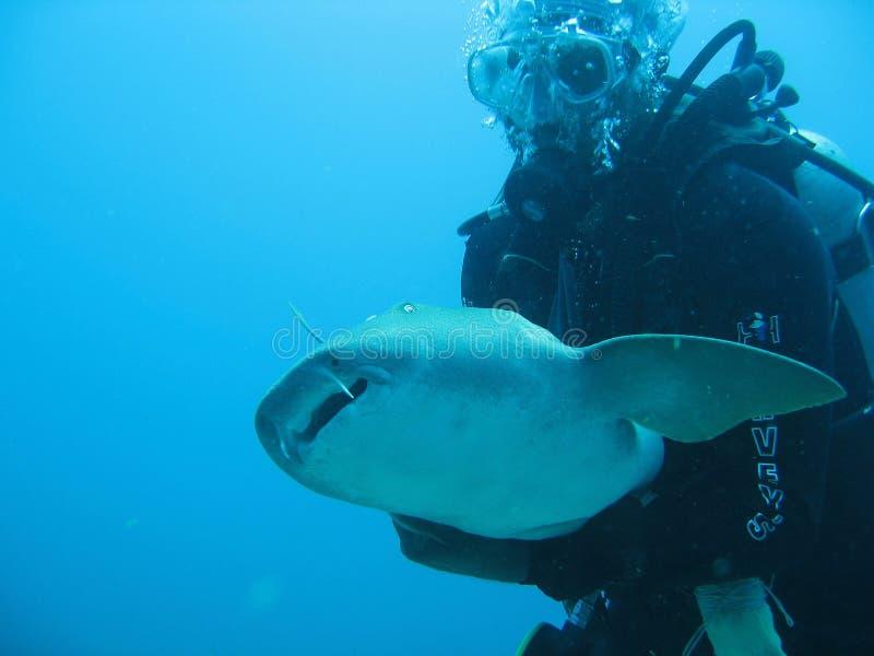 Haai in Belize Midden-Amerika royalty-vrije stock foto's