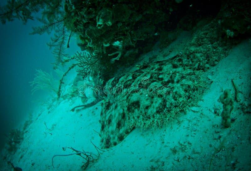 Haai die een rust heeft stock foto