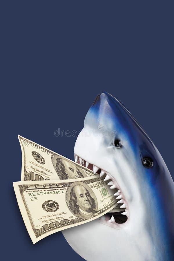Haai met 100 USD in mond stock foto