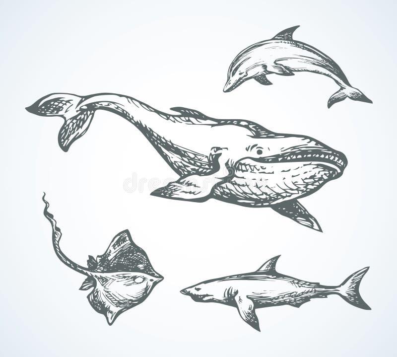 Haai Vector tekening royalty-vrije illustratie
