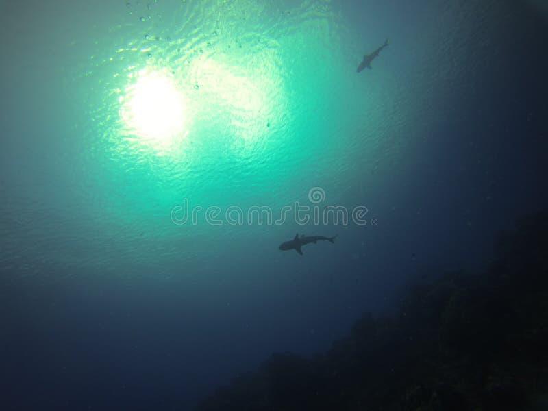 Haaien en donkergroene oceaan stock foto's