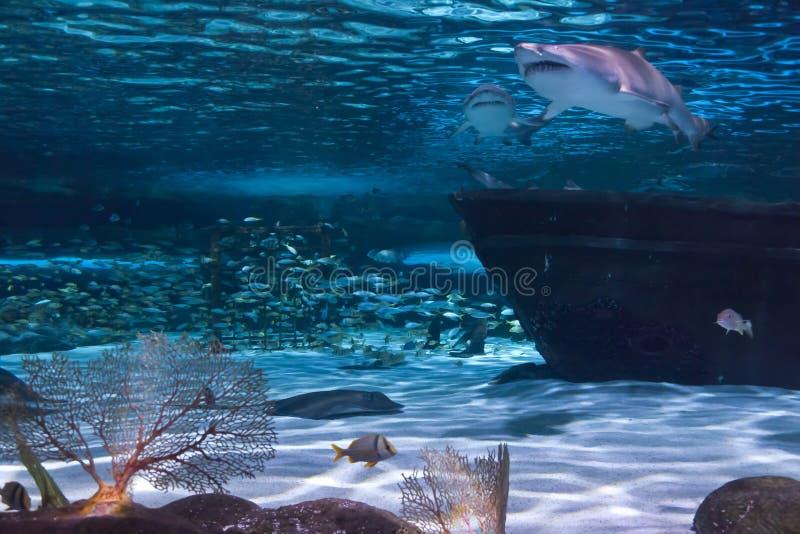 Haaien en Schipbreuk royalty-vrije stock fotografie