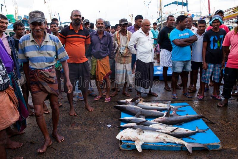 Haaivin - dode haaien bij vissenmarkt - Beruwela, Sri Lanka royalty-vrije stock foto