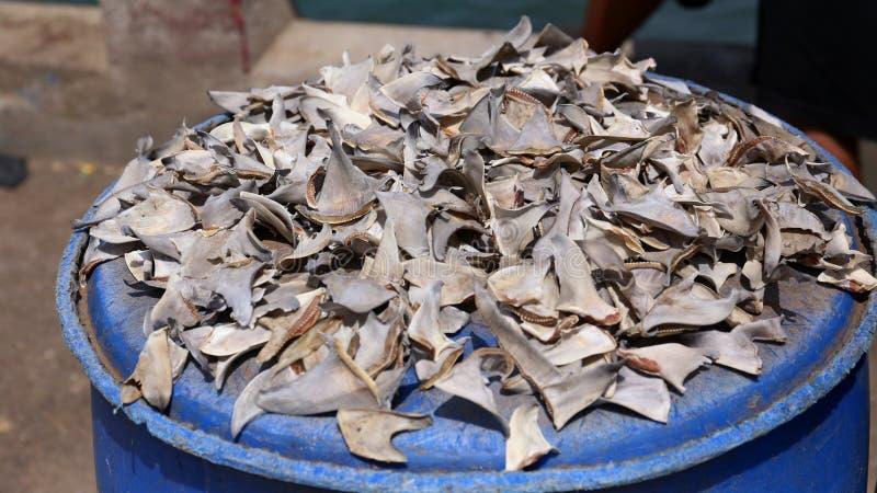 Haaivinnen op de vissenmarkt royalty-vrije stock foto