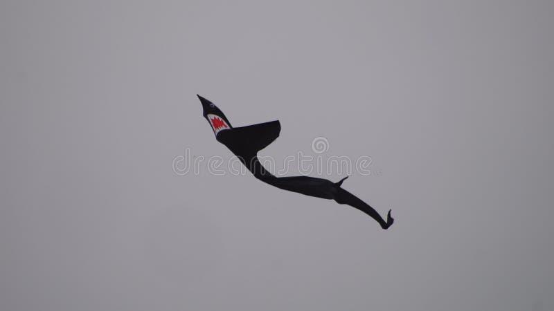 Haaivlieger royalty-vrije stock foto