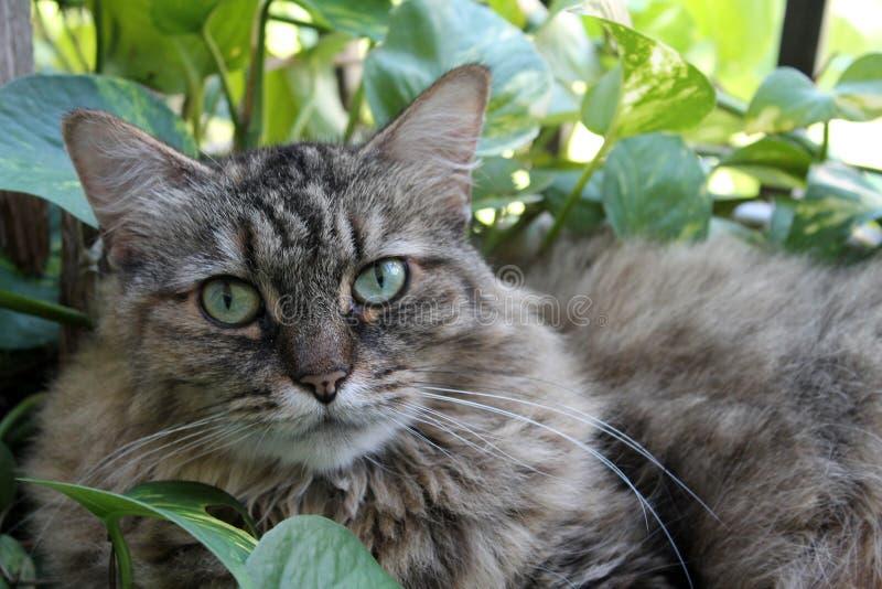 Haarige Katze in Garten 01 lizenzfreie stockbilder