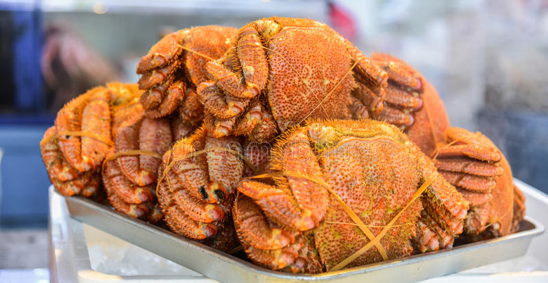 Haarige Krabbe Hokkaidos stockbilder