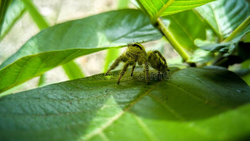 Haarige Spinne lizenzfreie stockfotografie