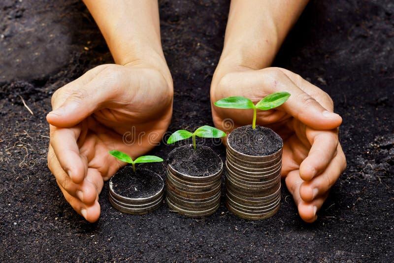 Haarlok het groeien op muntstukken stock foto