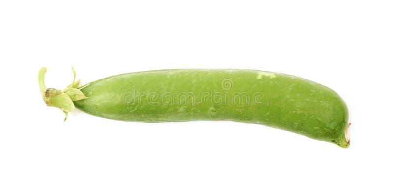 Haba de guisante verde aislada foto de archivo libre de regalías