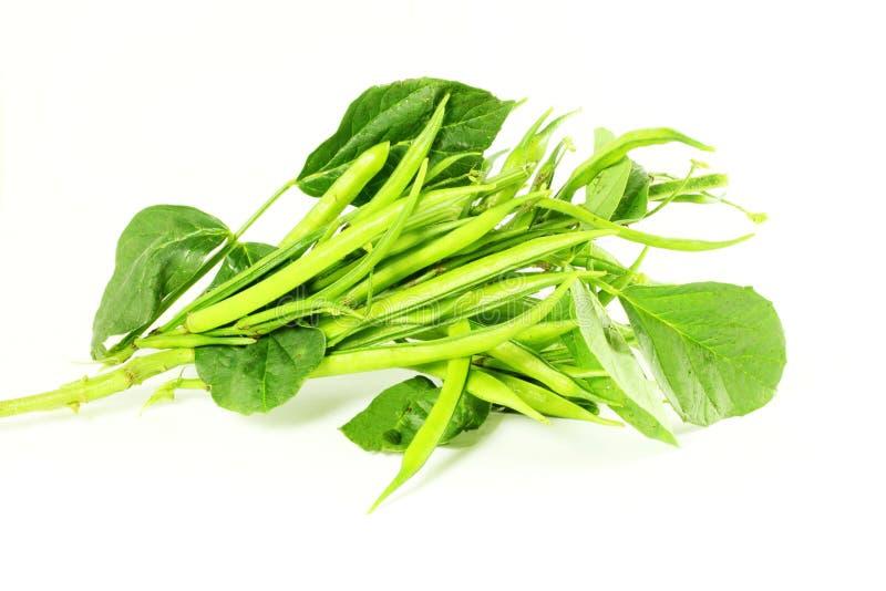 Haba de racimo o guar sido verdura india en el fondo blanco fotos de archivo libres de regalías