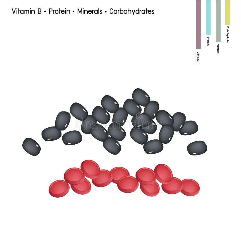 Haba de riñón con la vitamina B, la proteína, los minerales y los carbohidratos ilustración del vector