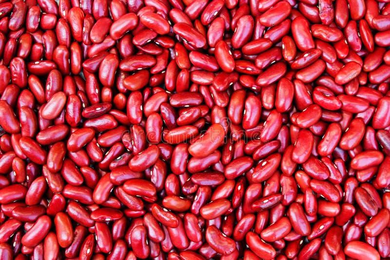 Haba de riñón roja en blanco imagen de archivo libre de regalías