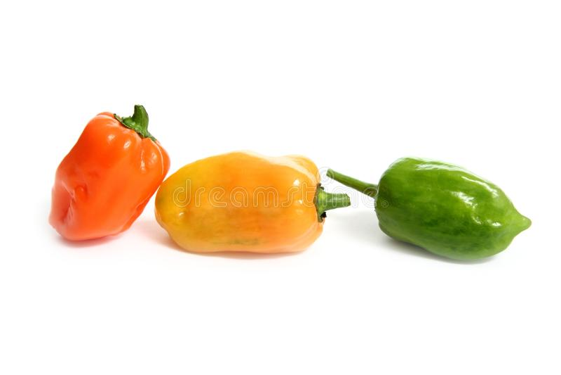 Habanero Capsicum chili hottest pepper stock photography