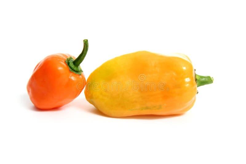 Habanero Capsicum chili hottest pepper royalty free stock photography