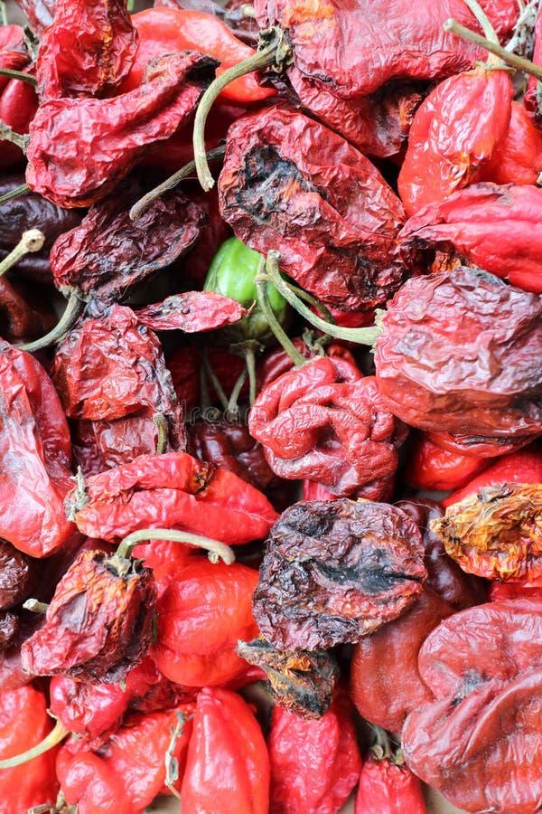 Habanero chłodny pieprz zdjęcia stock