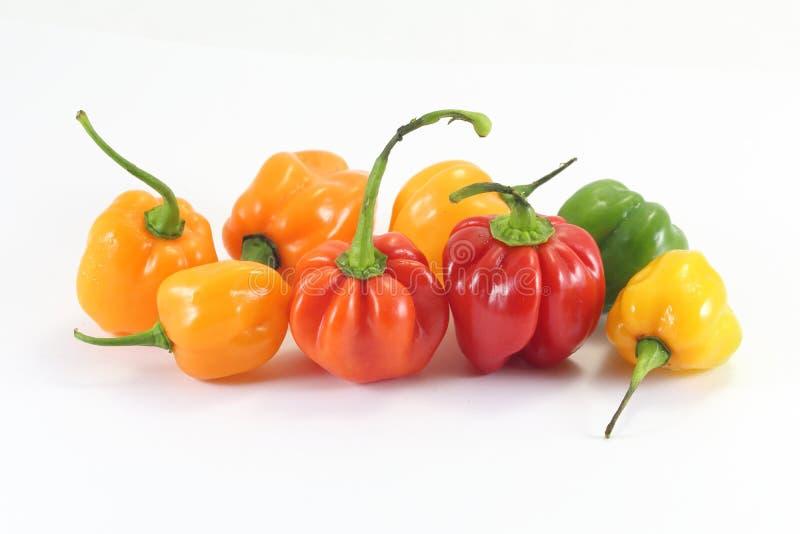 Habanero Chili Pepper imagens de stock royalty free