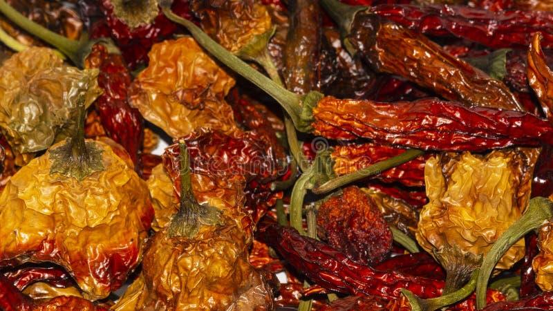 Habanero e pimenta vermelha longa secados imagens de stock royalty free
