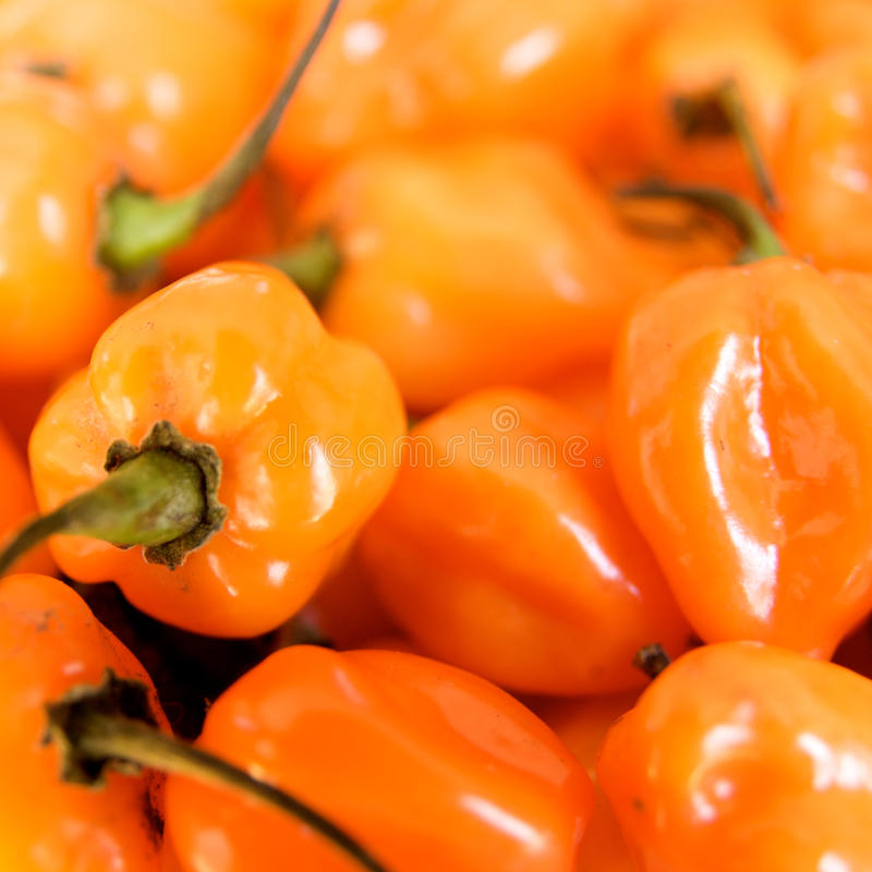 Free Habanero Peppers Stock Images - 13687844