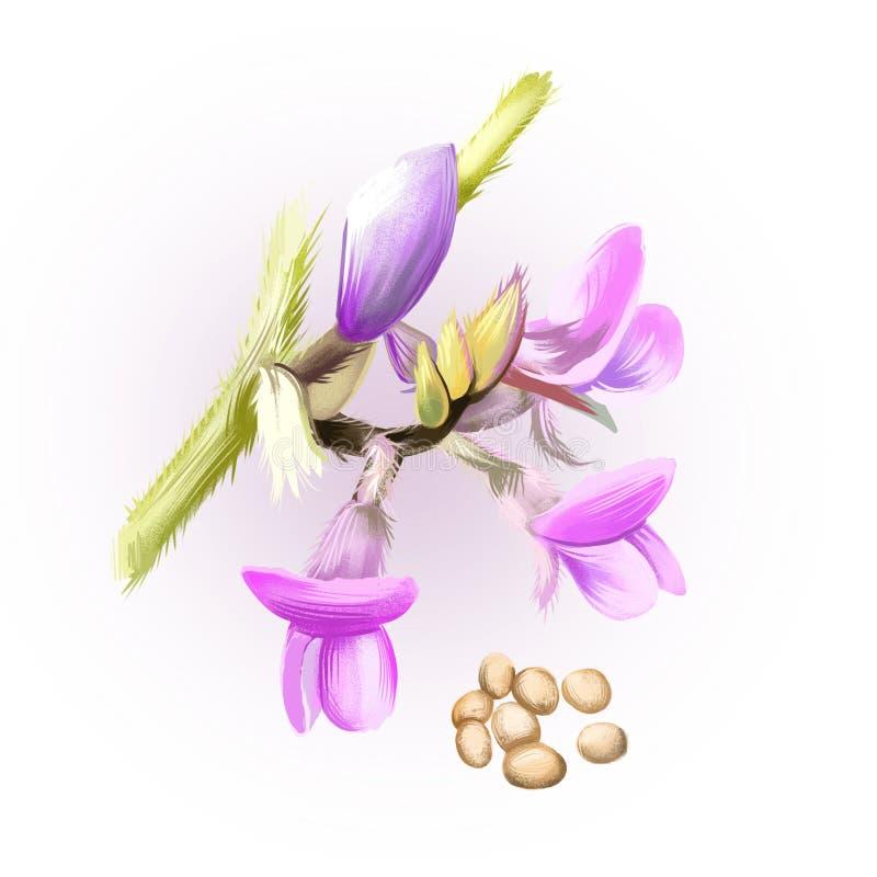 Habas de la soja aisladas en blanco Glicocola máxima, conocido comúnmente como soja, especie de legumbre crecida para la haba com libre illustration